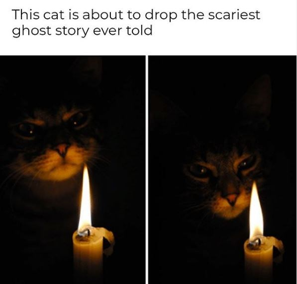 Lighting - This cat is about to drop the scariest ghost story ever told