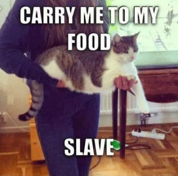 Cat - CARRY ME TO MY FOOD SLAVE