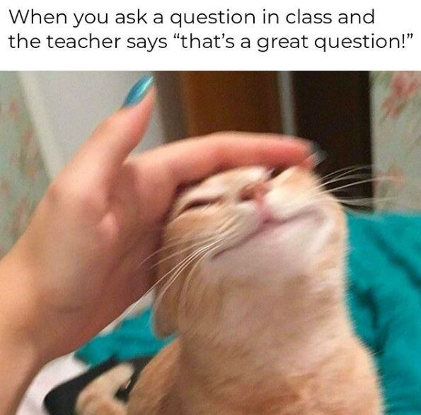 "Cat - When you ask a question in class and the teacher says ""that's a great question!"""
