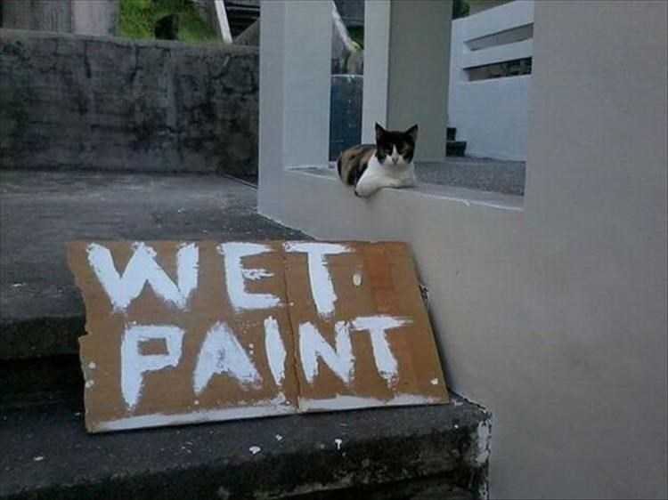Cat - WET PAINT