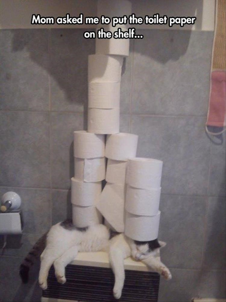 Room - Mom asked me to put the toilet paper on the shelf...