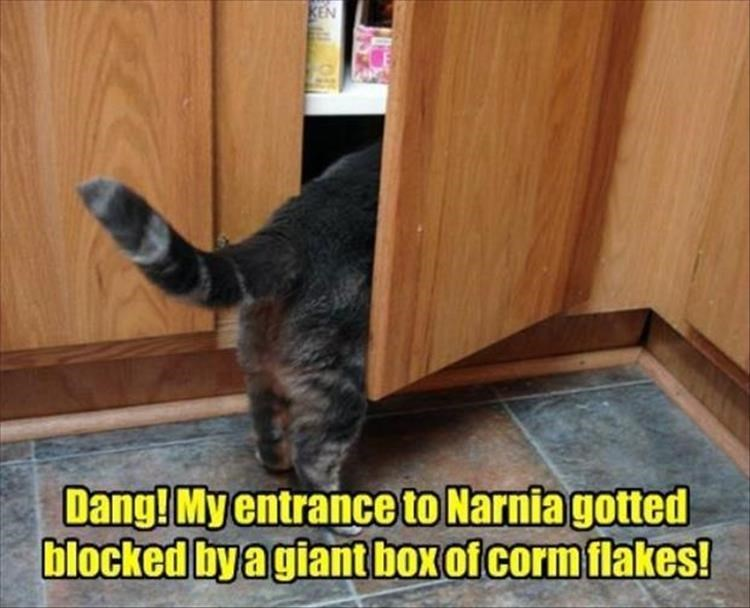 Cat - KEN Dang! My entrance to Narnia gotted blocked by a giant box of corm flakes!
