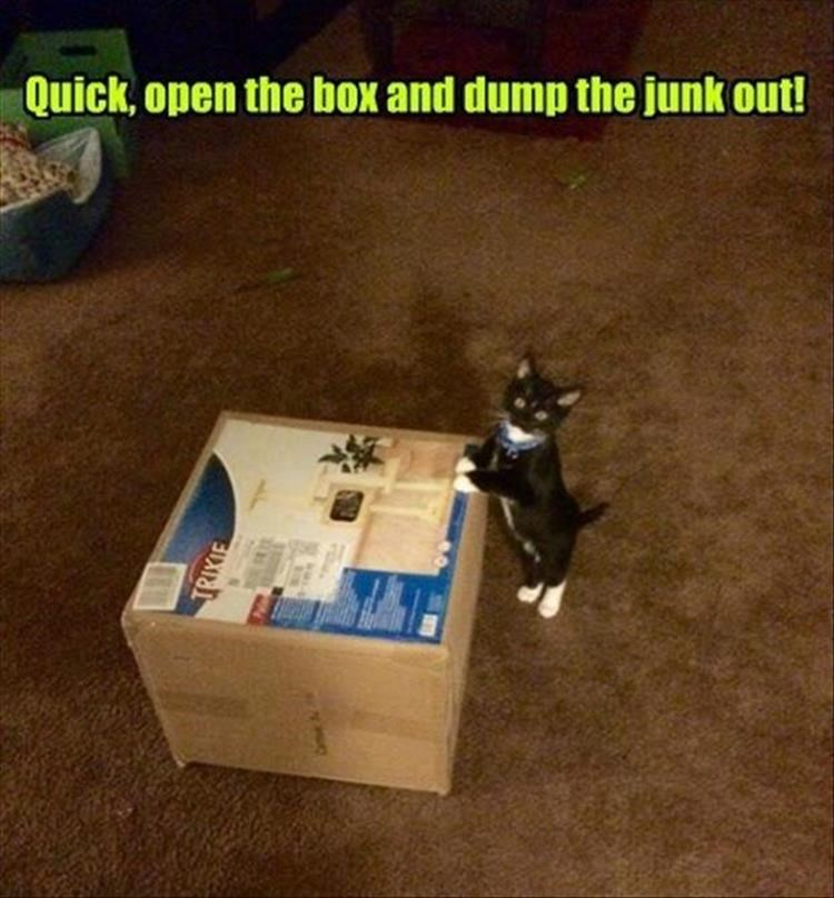 Quick, open the box and dump the junk out! TRIXIE