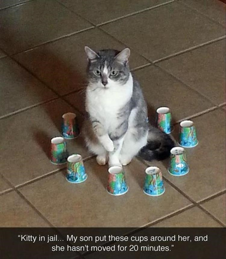 "Cat - ""Kitty in jail... My son put these cups around her, and she hasn't moved for 20 minutes."""