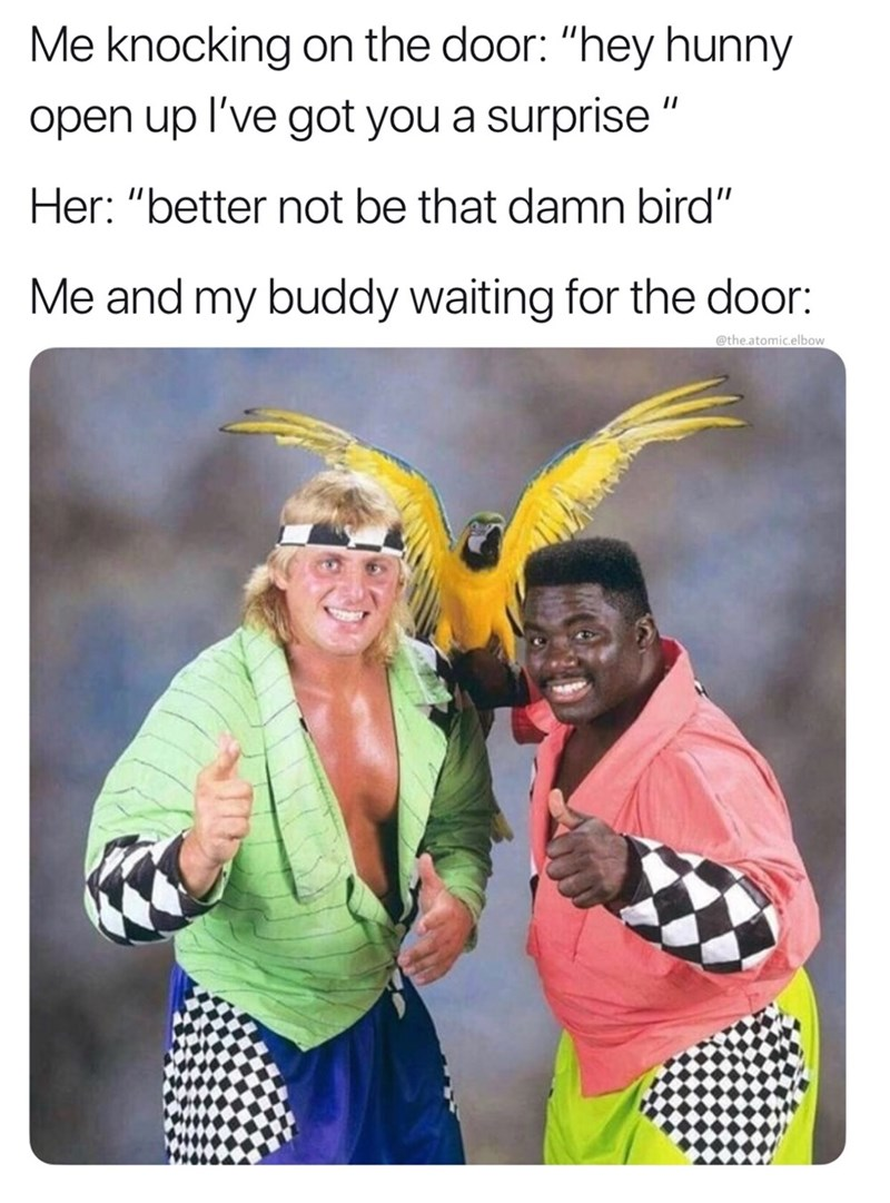 """Product - Me knocking on the door: """"hey hunny open up l've got you a surprise """" Her: """"better not be that damn bird"""" Me and my buddy waiting for the door: @the.atomic.elbow"""