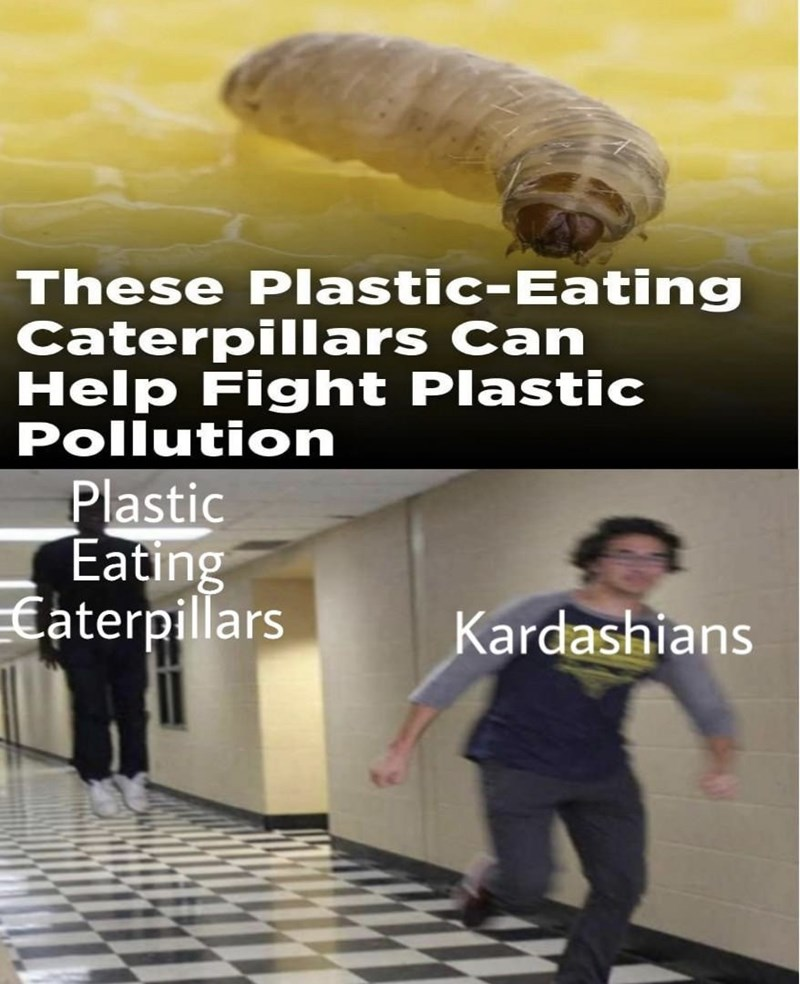 Headline about a caterpillar that eats plastic, above a meme of the Kardashians running away from it | These plastic eating caterpillars can help fight plastic pollution Floating Boy Chasing Running Boy