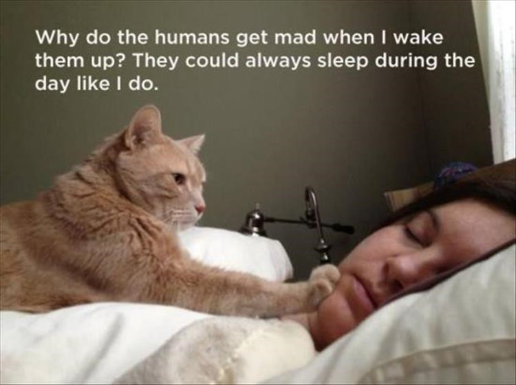 Cat - Why do the humans get mad when I wake them up? They could always sleep during the day like I do.