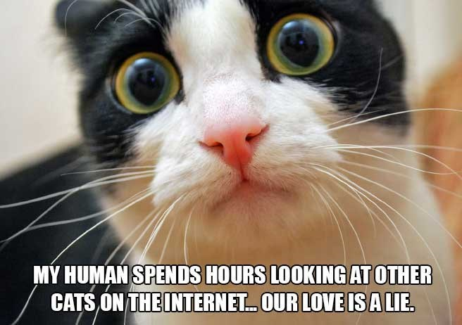 Cat - MY HUMAN SPENDS HOURS LOOKING AT OTHER CATS ON THE INTERNET. OUR LOVE ISA LIE.