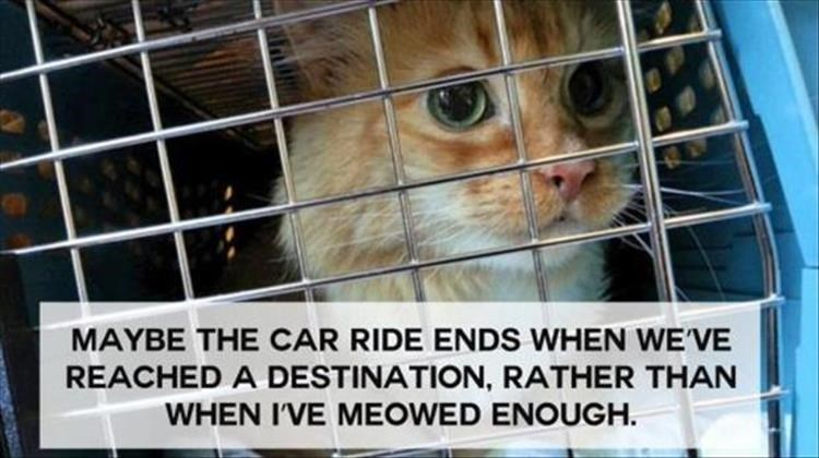 Animal shelter - MAYBE THE CAR RIDE ENDS WHEN WE'VE REACHED A DESTINATION, RATHER THAN WHEN I'VE MEOWED ENOUGH.