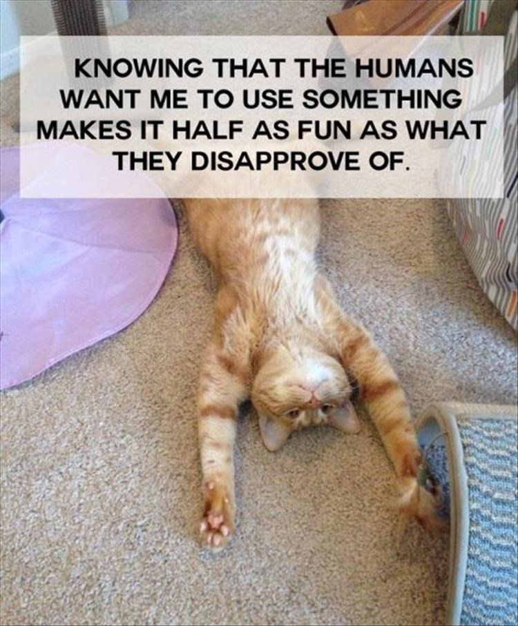 Cat - KNOWING THAT THE HUMANS WANT ME TO USE SOMETHING MAKES IT HALF AS FUN AS WHAT THEY DISAPPROVE OF.