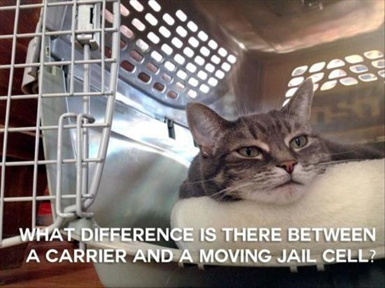 Cat - WHAT DIFFERENCE IS THERE BETWEEN A CARRIER AND A MOVING JAIL CELL?