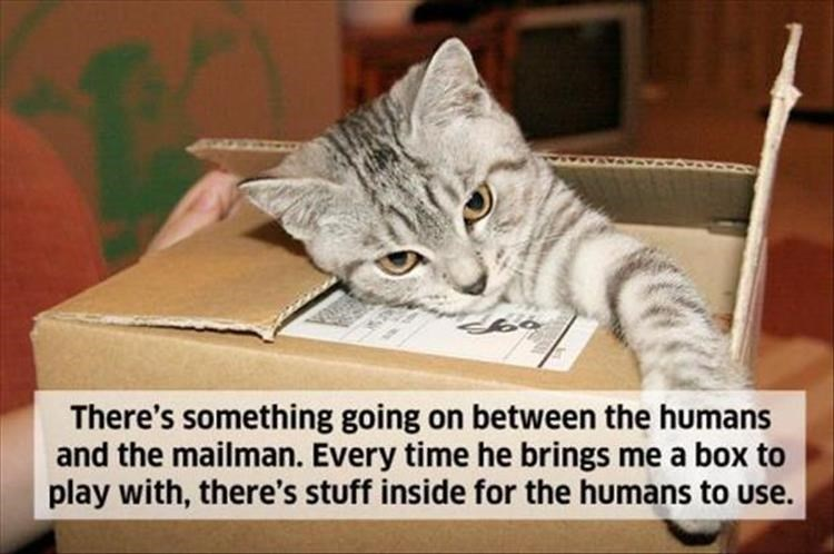 Cat - There's something going on between the humans and the mailman. Every time he brings me a box to play with, there's stuff inside for the humans to use.