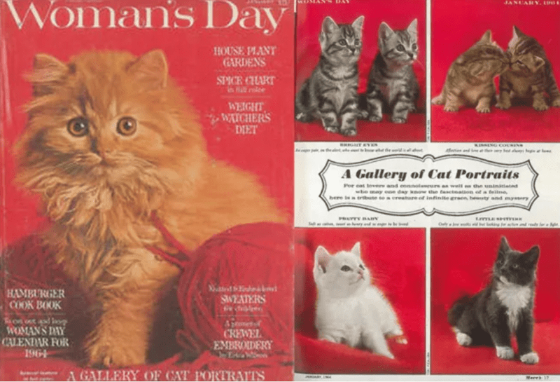 woman's day a gallery of cat portraits HAMBURGER COOK BOOK WOMAN'S DAY CALENDAR FOR 1964 HOUSE PLANT GARDENS SPICE CHART WEIGHT WATCHERS DIET