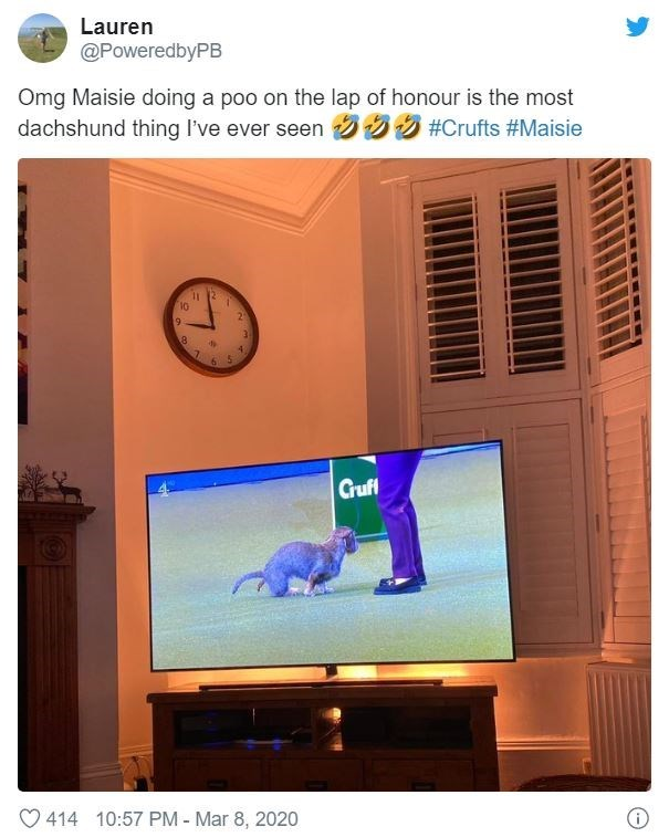 Product - Lauren @PoweredbyPB Omg Maisie doing a poo on the lap of honour is the most dachshund thing I've ever seen 359 #Crufts #Maisie 11 12 4. Gruff O 414 10:57 PM - Mar 8, 2020