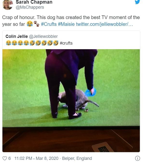 Text - A Sarah Chapman @MsChappers Crap of honour. This dog has created the best TV moment of the year so far #Crufts #Maisie twitter.com/jelliewobbler/... Colin Jellie @Jelliewobbler AeeeO0 95 #crufts 6 11:02 PM - Mar 8, 2020 · Belper, England