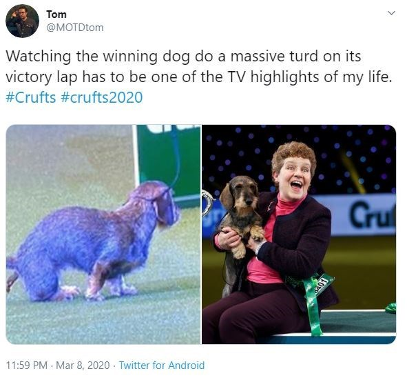 Text - Tom @MOTDtom Watching the winning dog do a massive turd on its victory lap has to be one of the TV highlights of my life. #Crufts #crufts2020 Crul 11:59 PM Mar 8, 2020 · Twitter for Android LODP