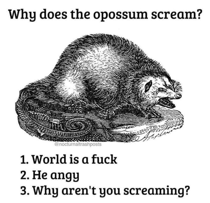 Organism - Why does the opossum scream? @nocturnaltrashposts 1. World is a fuck 2. He angy 3. Why aren't you screaming?