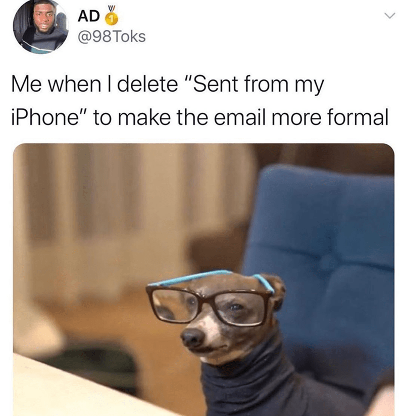 Funny meme about deleting sent from my iphone to make emails seem more professional | dog wearing glasses