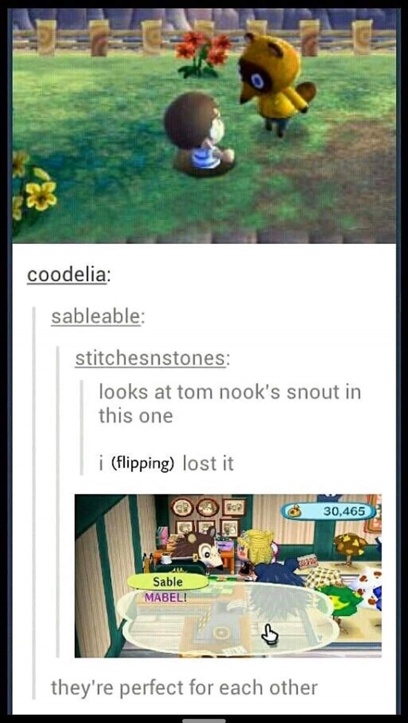 Adaptation - coodelia: sableable: stitchesnstones: looks at tom nook's snout in this one i (flipping) lost it 30,465 Sable MABELI they're perfect for each other