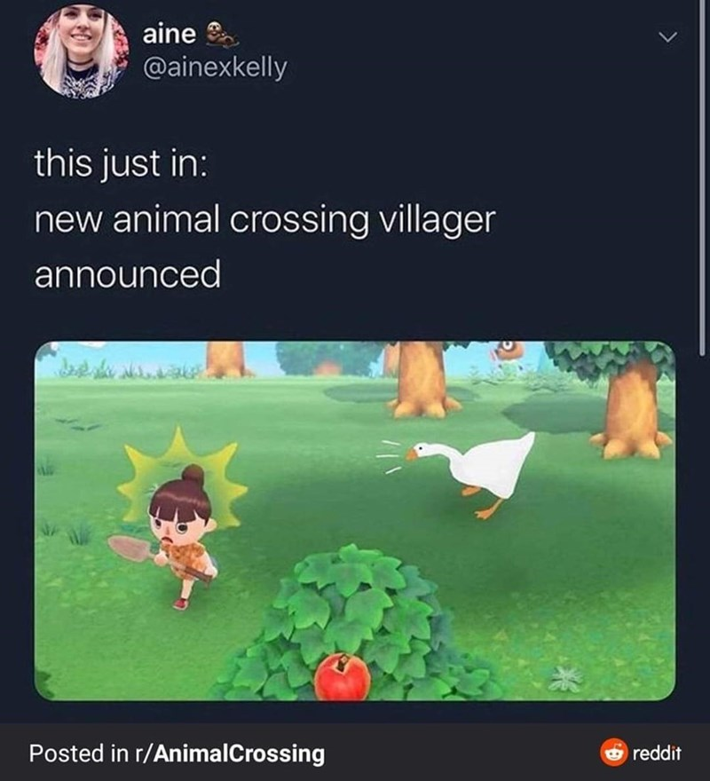 Screenshot - aine @ainexkelly this just in: new animal crossing villager announced Posted in r/AnimalCrossing O reddit