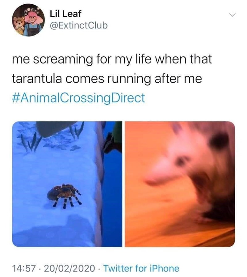Organism - Lil Leaf @ExtinctClub me screaming for my life when that tarantula comes running after me #AnimalCrossingDirect 14:57 · 20/02/2020 · Twitter for iPhone