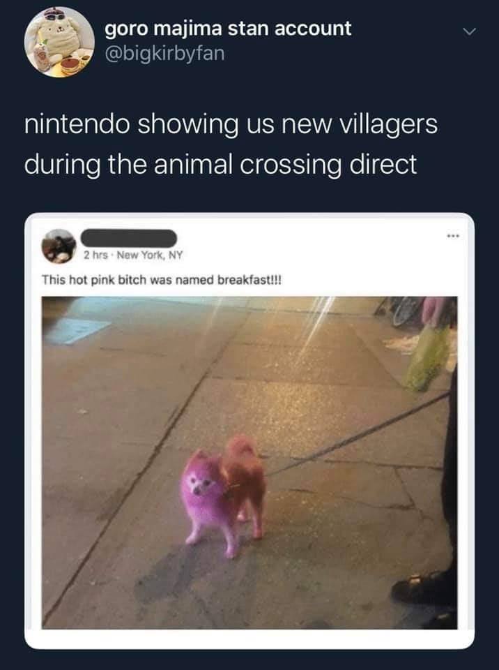 Text - goro majima stan account @bigkirbyfan nintendo showing us new villagers during the animal crossing direct ... 2 hrs New York, NY This hot pink bitch was named breakfast!!
