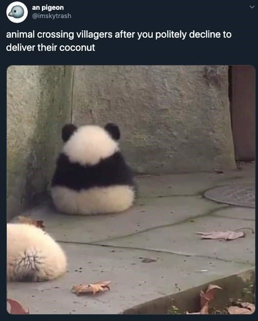 Panda - an pigeon @imskytrash animal crossing villagers after you politely decline to deliver their coconut