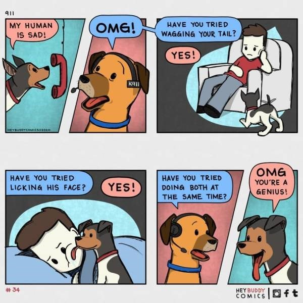 Cartoon - 911 MY HUMAN HAVE YOU TRIED OMG! IS SAD! WAGGING YOUR TAIL? YES! ка HEVBUDDYCOMIESIsora OMG HAVE YOU TRIED HAVE YOU TRIED DOING BOTH AT YOU'RE A LICKING HIS FACE? YES! GENIUS! THE SAME TIME? # 34 HEY BUDDY COMICS Oft