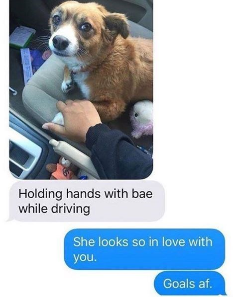 Dog - Holding hands with bae while driving She looks so in love with you. Goals af.