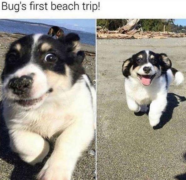 Dog - Bug's first beach trip!