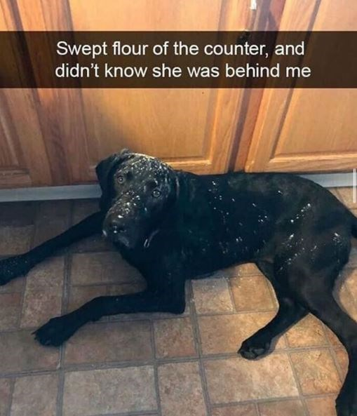 Dog - Swept flour of the counter, and didn't know she was behind me