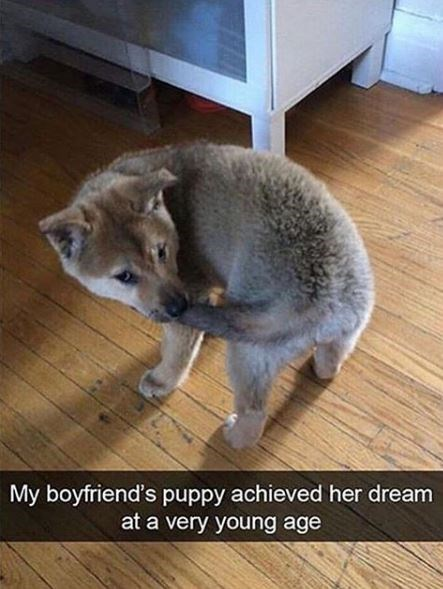 Photo caption - My boyfriend's puppy achieved her dream at a very young age