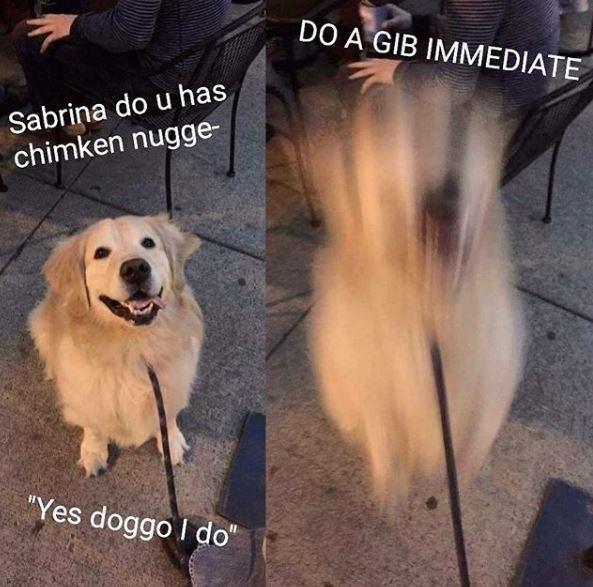 "Dog - DO A GIB IMMEDIATE Sabrina do u has chimken nugge- ""Yes doggo I do"""