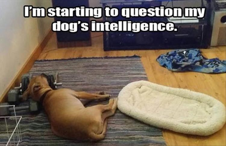 Floor - I'm starting to question my dog's intelligence.