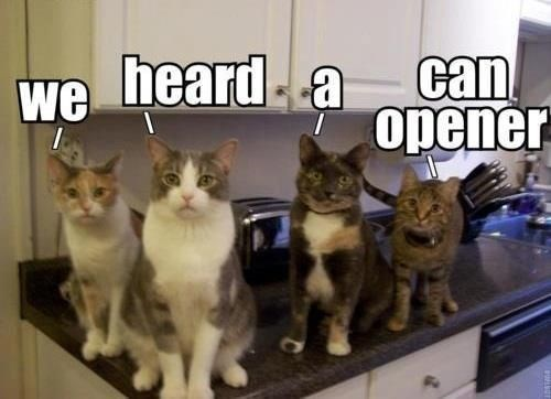 Hungry Cats Who Have Just Heard The Sound Of a Can Opening (Memes) - I Can  Has Cheezburger?
