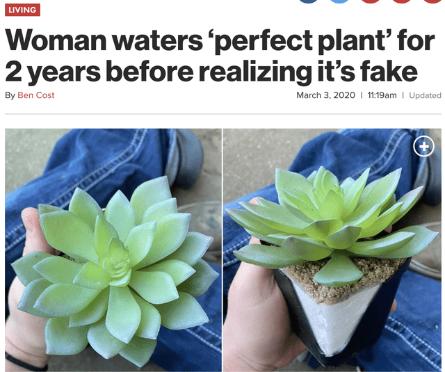 Flower - LIVING Woman waters 'perfect plant' for 2 years before realizing it's fake By Ben Cost March 3, 2020 I 11:19am | Updated