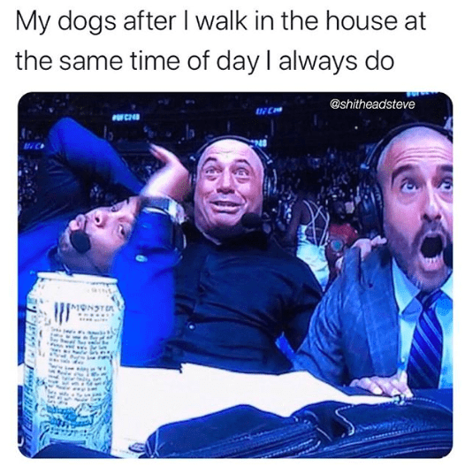 Water - My dogs afterI walk in the house at the same time of day I always do @shitheadsteve
