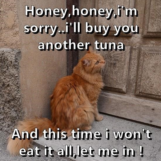 Cat - Honey.honey,i'm sorry.i'll buy you another tuna And this time i won't eat it all, let me in !