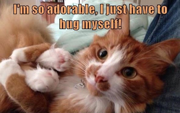 Cat - I'm so adorable, I just have to hug myself!