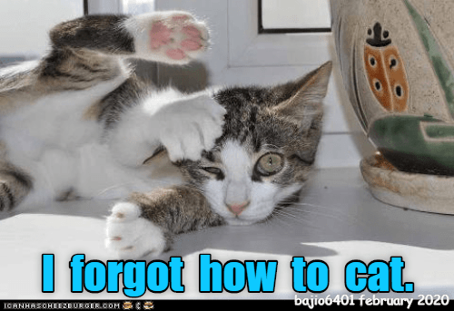 Cat - bajio6401 february 2020 ICANHASCHEEZBURGER.COM: