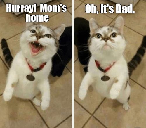 Cat - Hurray! Mom's home Oh, it's Dad.