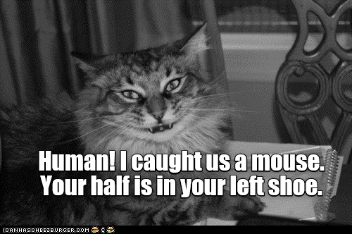 Cat - Human! I caught us a mouse. Your half is in your left shoe. ICANHASCHEEZBURGER.COM