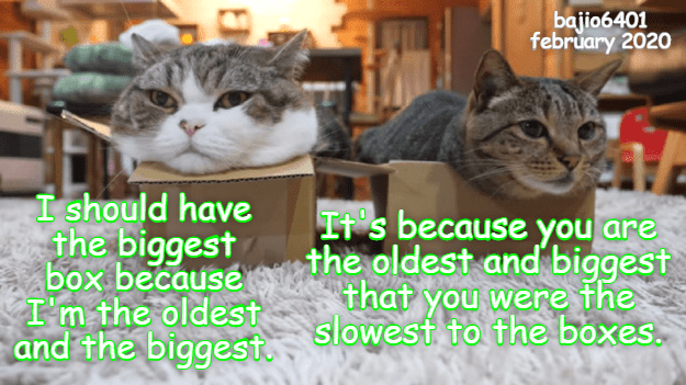 Cat - bajio6401 february 2020 I should have the biggest box because I'm the oldest and the biggest. It's because you are the oldest and biggest that you were the slowest to the boxes.