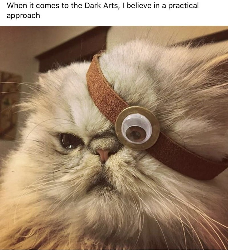 cat meme | when it comes to the dark arts i believe in a practical approach pic of a fluffy cat wearing a minions eye strap