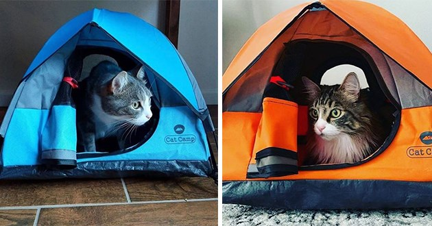 cat camping tents awesome