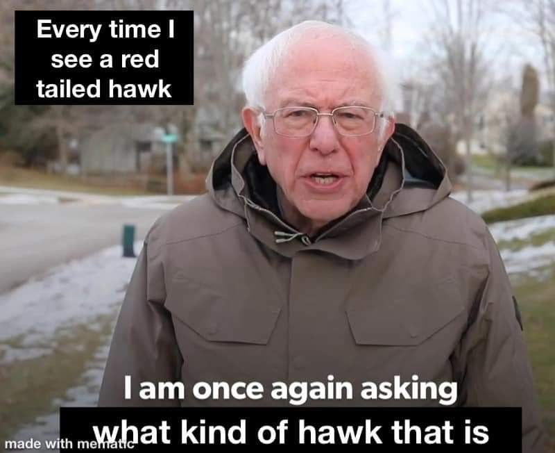 Photo caption - Every time I see a red tailed hawk I am once again asking what kind of hawk that is made with mematic