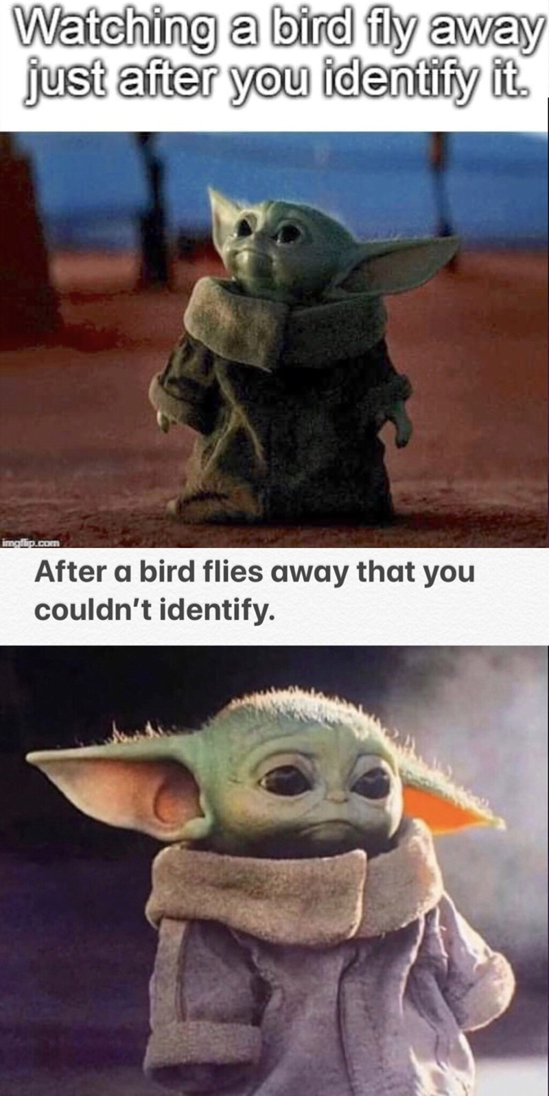Yoda - Watching a bird fly away just after you identify it. imgflip.com After a bird flies away that you couldn't identify.