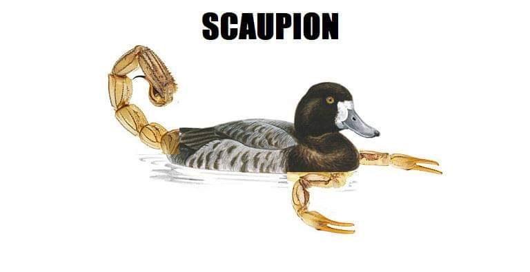 Bird - SCAUPION