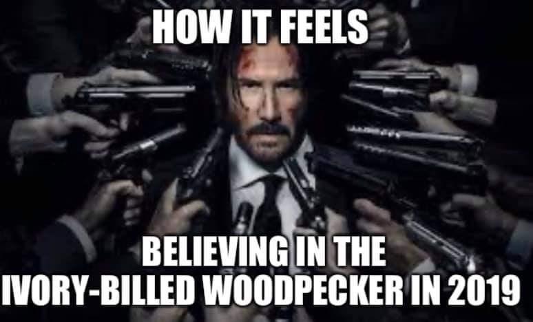 Movie - HOW IT FEELS BELIEVING IN THE IVORY-BILLED WOODPECKER IN 2019