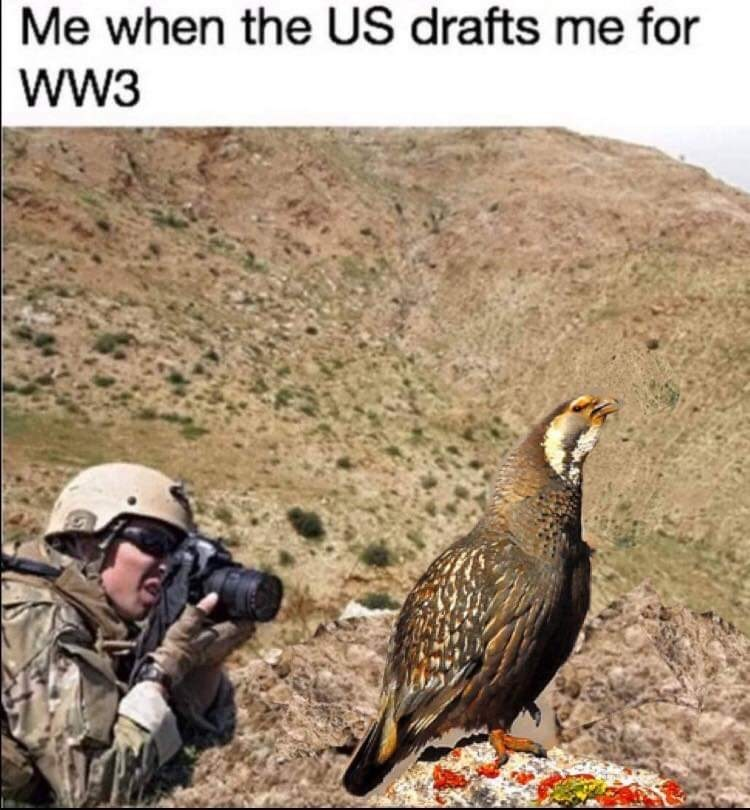 Bird - Me when the US drafts me for wW3